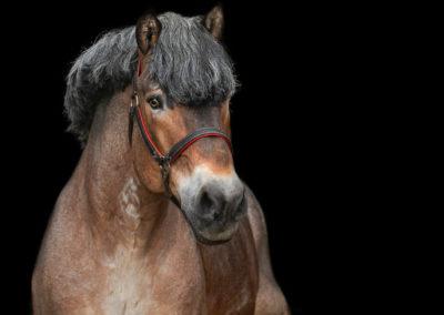 Professionelle-Pferdezucht-Deutschland